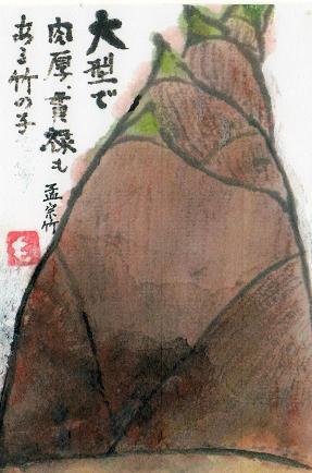 タケノコimg413