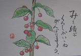 1-赤い実.JPG