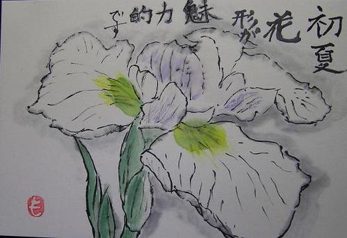 絵手紙・花しょうぶ2010 06 13 001