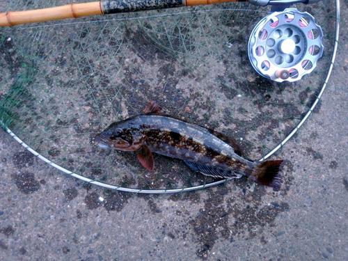 241221鮎魚女IMG_20121221_120000