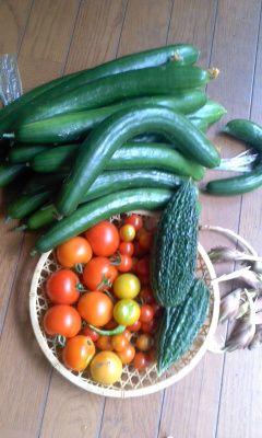 収穫180721_0859~01