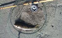 220110鮎魚女20100109101249