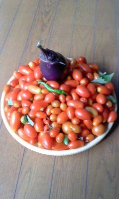 収穫130831_0908~01