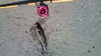 4鮎魚女20091223113018