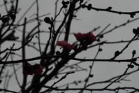 紅梅DSC_1114