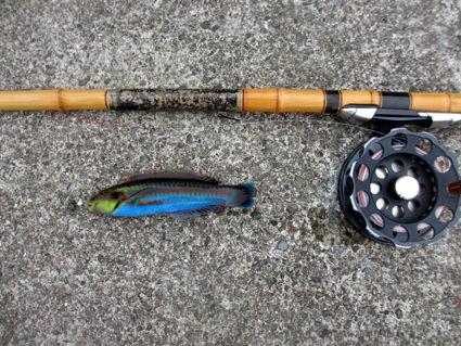 251208魚1IMG_0522