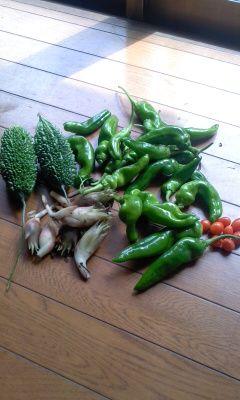 260906収穫収穫140906_1225~01