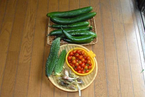 200808収穫