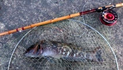 250413鮎魚女IMG_0420