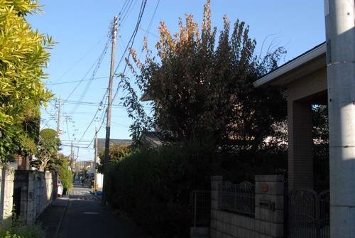 201114枝下ろし前DSC_7166