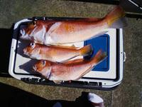 211219沖釣り師200912201033
