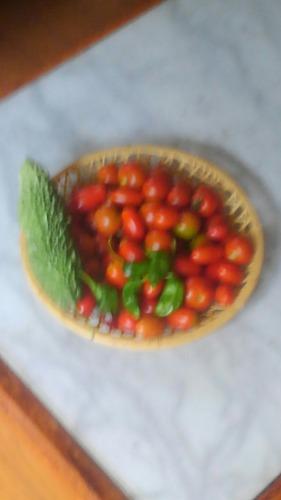 収穫KIMG0065_1