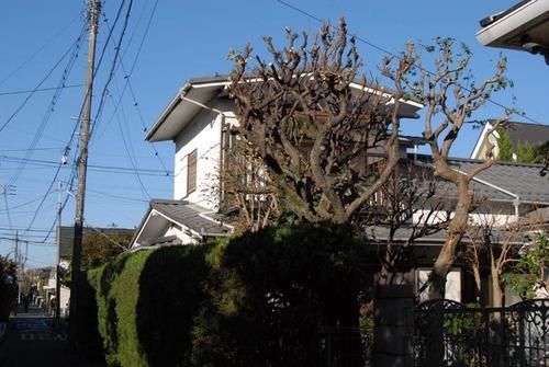 201114枝下ろし後DSC_7186
