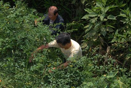 250810収穫作業DSC_3194