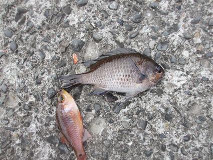 251208魚3IMG_0532