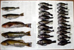 201222全釣果