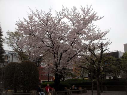 290408桜IMG_1395