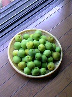 梅採り140614_1457~01