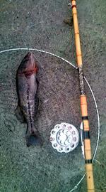230503鮎魚女20110501174335