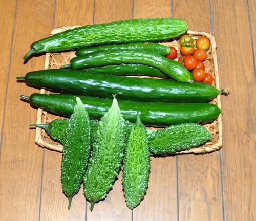 200718収穫DSC_7028