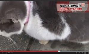 03 見つけた猫の首輪は、普通に付いている