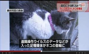 02 猫の首輪が裏返し
