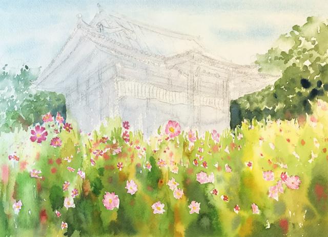 透明水彩画「コスモス寺(奈良)」製作途中 (4)
