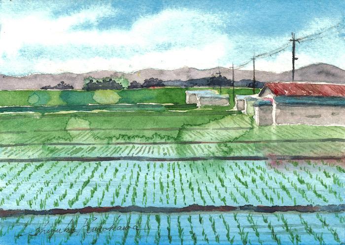 「絵墨」をちょっと使った 透明水彩画「枚方の田園」