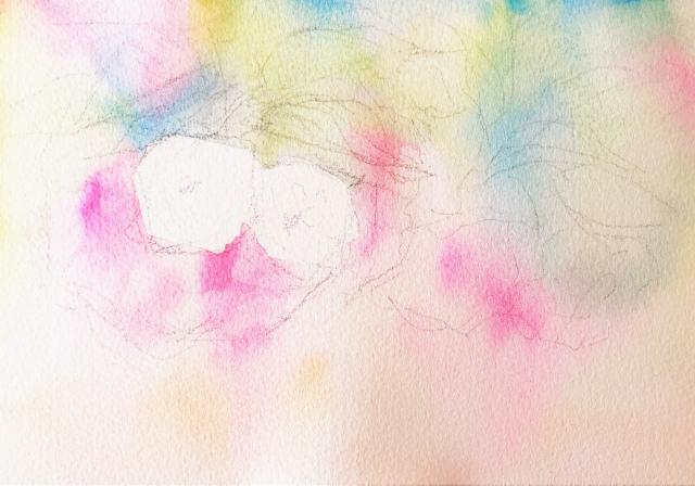 2020.01.18透明水彩画「八重桜」サムサイズ 途中