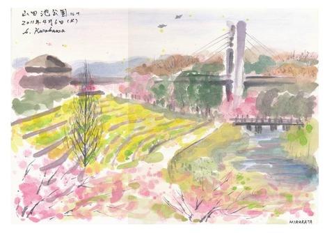 画仙紙顔彩スケッチで『桜』を描きました♪(老人ホームの花見&水彩スケッチクラブ研究会にて)
