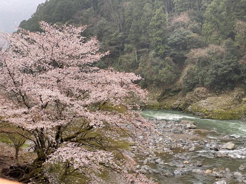 【📷写真特集】🌸京都嵯峨野・保津川・嵐山・北山界隈への旅 🌸