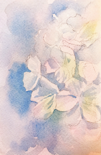 20200115透明水彩画「ソメイヨシノ#1」途中 (2)