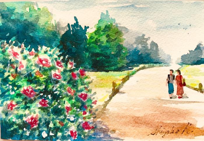 葉書de一日一枚「バラ園へ続く道」