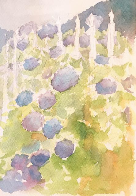 透明水彩「紫陽花」野村重存本30頁 (5)