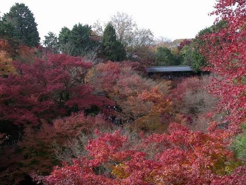 京都は 「東福寺」の紅葉を取材しました!「通天橋」からの眺めは最高でした♪