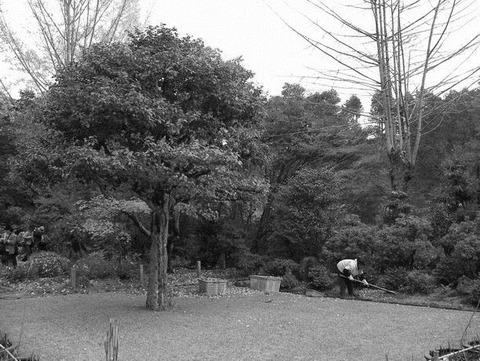 三室戸寺の朝 グレースケール