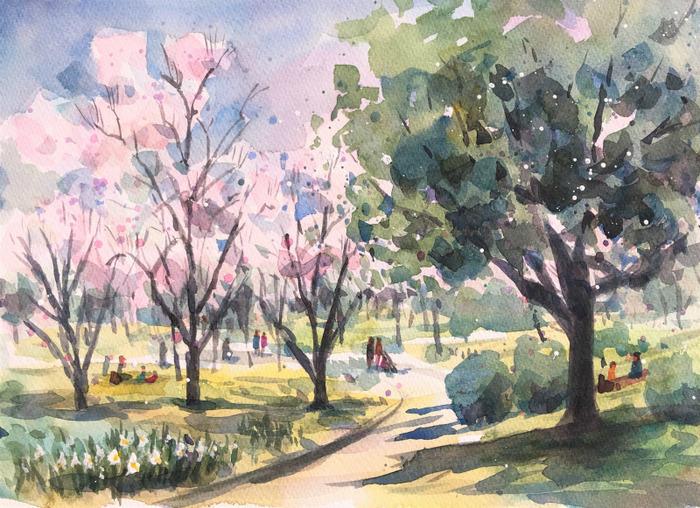 くろかわ透明水彩画教室(3.18スケッチ会)スモモの花の咲く丘で🌸