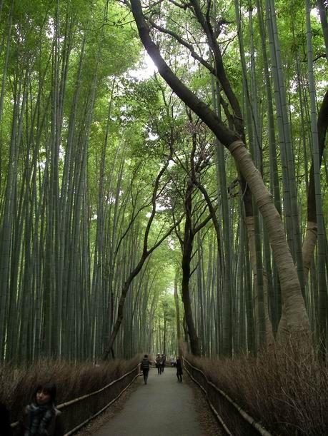 京都は 嵐山 「保津川下り」に行って来ました。
