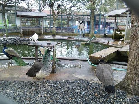 八幡市立こども動物園 で 素描 をするも寒さに負けて帰宅。
