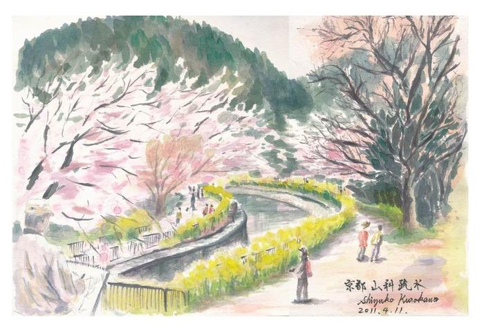 画仙紙顔彩スケッチ「京都山科疏水『桜』」