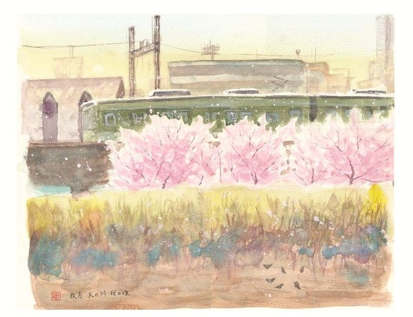 ボケボケの一日 透明水彩スケッチ『枚方市 天の川 桜の頃』