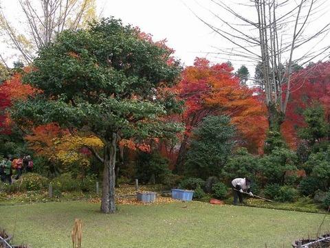 次回作「三室戸寺の秋」構想