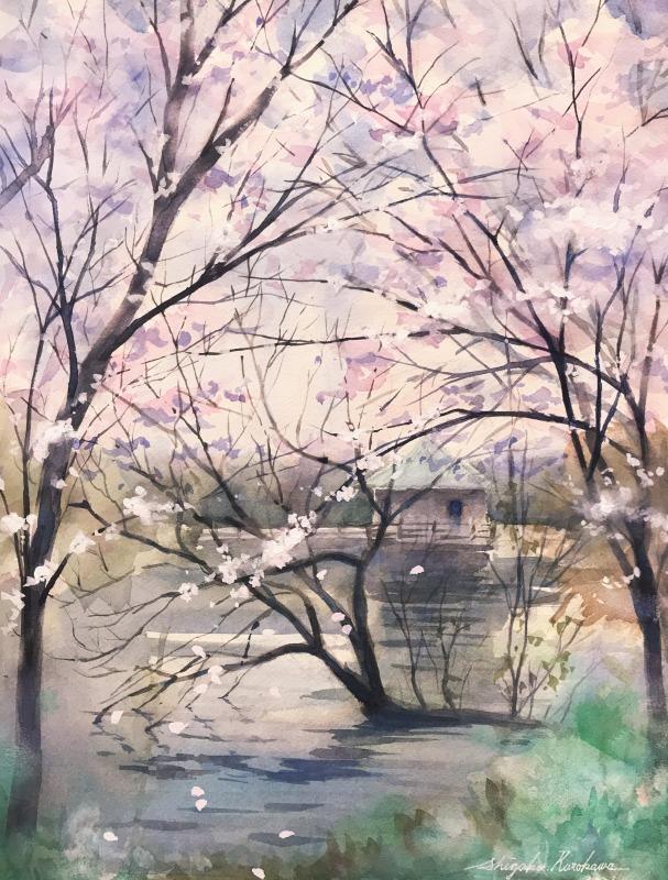 透明水彩画「山田池の春🌸」~自然に配置する難しさはスパコン並みに頭を使うことだから?~