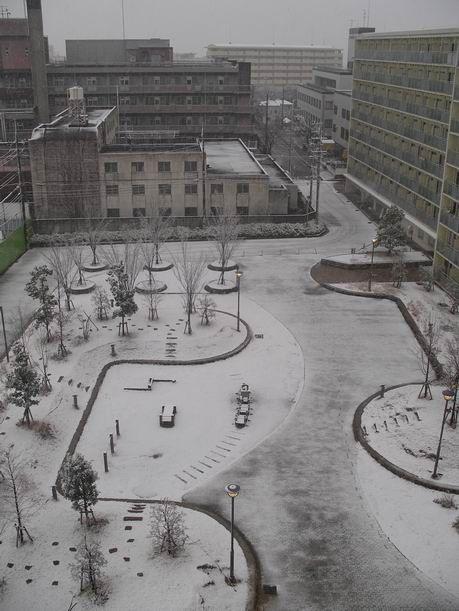 枚方に『年に一度の雪』が降りました♪