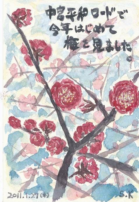 中宮平和ロードで今年最初の「梅の花」を発見しました♪ & 初めての「レストラン男山」