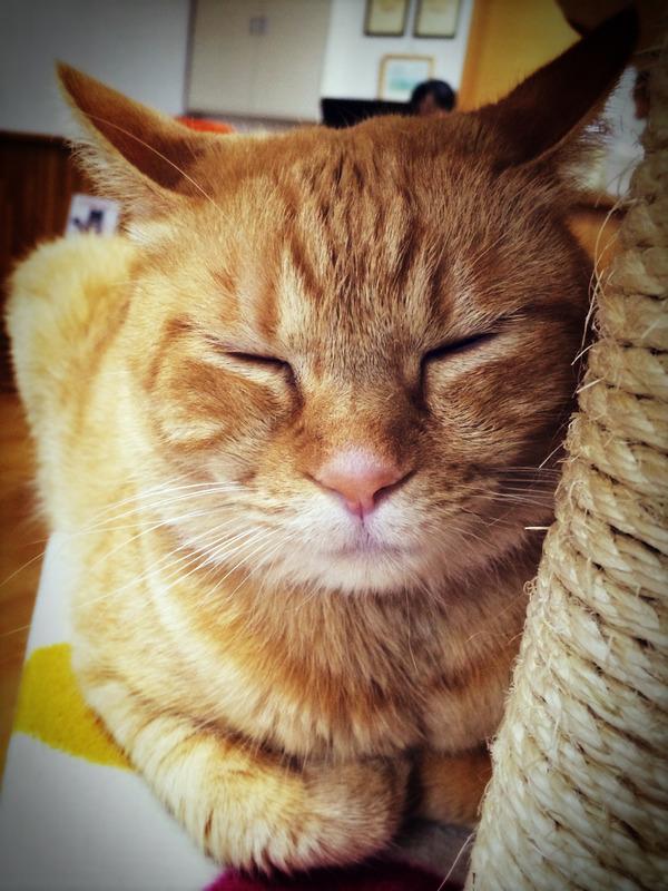 京都ぶらり町歩き取材 猫とかスイーツとか・・・