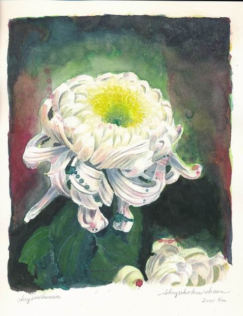 透明水彩画作品「菊2010」