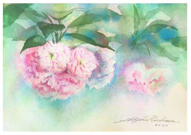 2020.01.18透明水彩画「八重桜」サムサイズ 完成