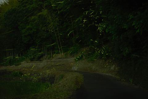 DSC_0607-Edit-Edit