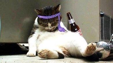 cat 28